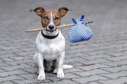 FIDO pomoże komunikować się z psami
