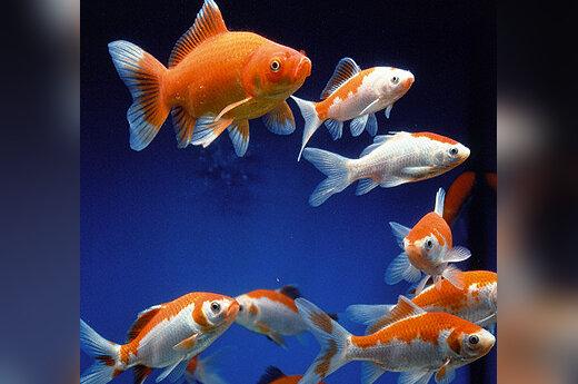 Akvariumas