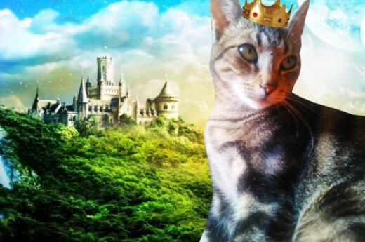Dovanojama Prinčipesa – kačių grožio karalienė!