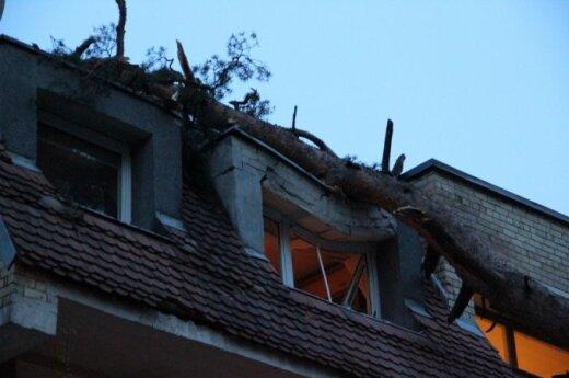 Vilniuje ant daugiabučio užvirto pušis, įlūžo stogas
