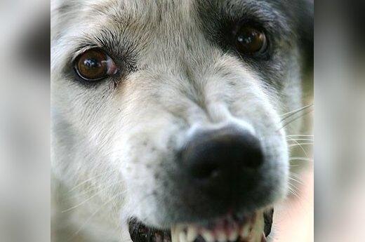 Susirūpinęs šeimininkas pasipiktino gyvūnų gelbėjimu nuo pasiutligės