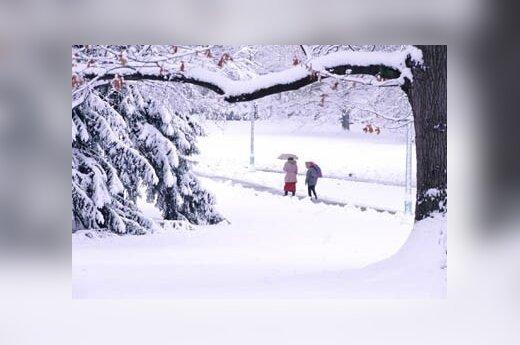 В Польше замерзли насмерть 52 человека