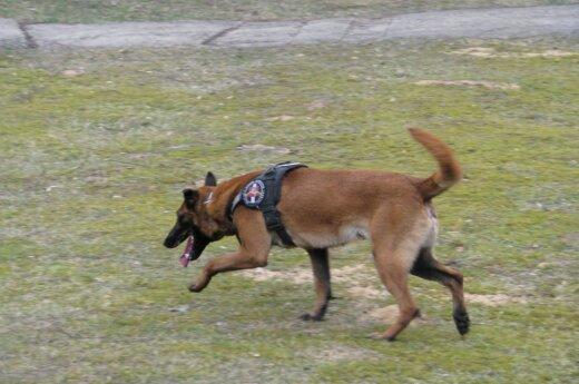 Глава МВД: служебных собак могли бы приравнять должностным лицам