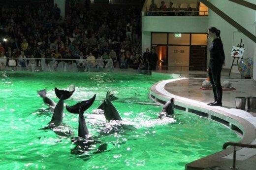Jūrų muziejus ekspoziciją atvėrė paskutinį kartą: delfinų šėlsmas
