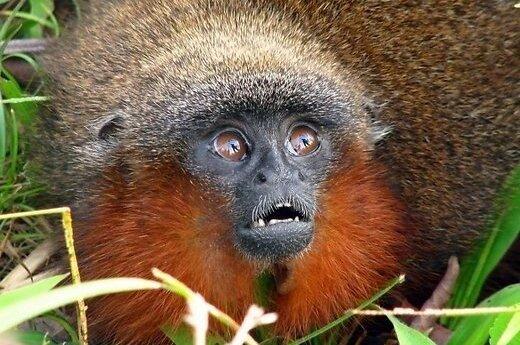 В джунглях Амазонки обнаружены необычные животные