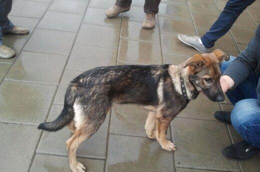 Prie Ozo rastas šunelis ieško globos arba namų