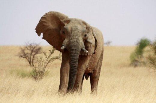 "Танзанийский слон убил сотрудника ""Би-Би-Си"""