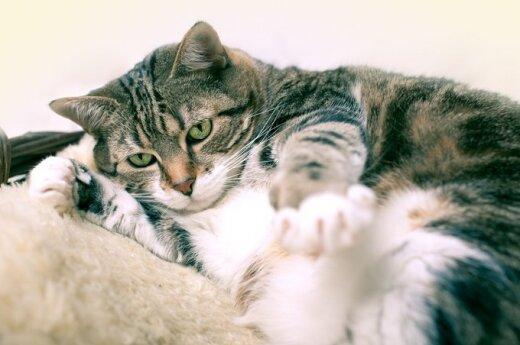 Graudi senolės meilė sergančiam gyvūnui: kol gyvenu aš, gyvens su manimi ir ši katytė