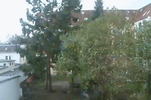 Užfiksavo, kaip milžiniškas vėjas prieš akis nulaužia medį