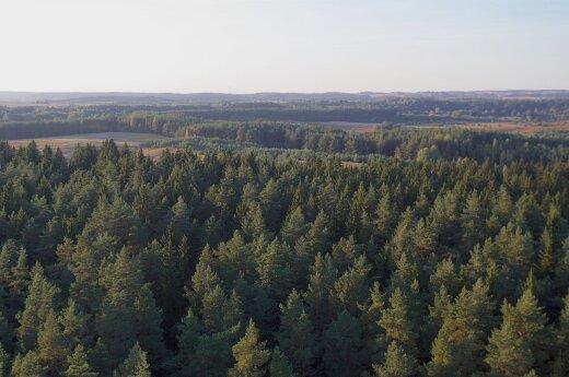 Tikimasi, kad iš mažų medelių išaugs toks miškas
