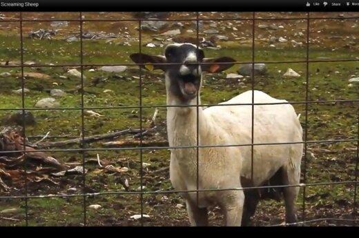 Szwecja: Całkowity zakaz zoofilii