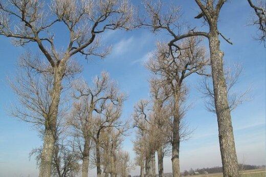 Деревья стали расти быстрее