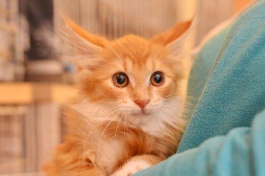 Vaikų darželio rūsyje augę kačiukai ieško namų!