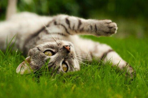 Почему кошки так часто потягиваются: о пользе растяжки