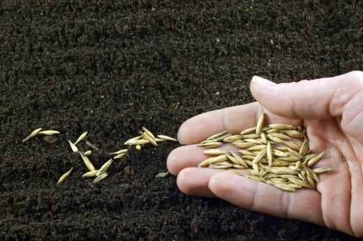 Предварительные данные Росстата: урожай в России вырос за год почти на треть