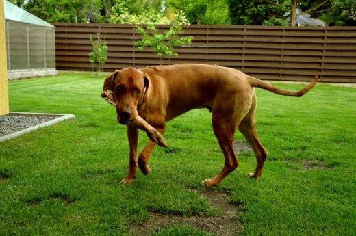 Rokantiškėse dingo šunelis
