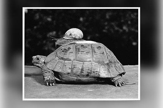 Черепахи парализовали работу аэропорта Нью-Йорка