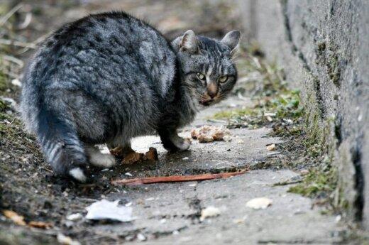 В Вильнюсе стерилизовано более 900 бездомных животных