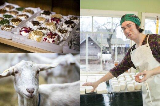 Svarbiausia gero sūrio sąlyga - laimingos ožkos