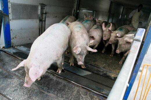 """Jonavos rajono """"Beržų komplekse"""" įtariamas kiaulių maras"""