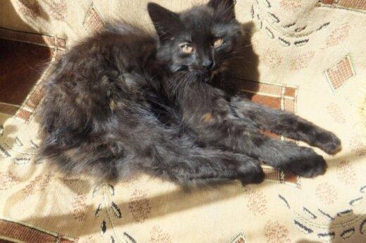 Vaikų radinys - mažas kačiukas, vardu Kasparas