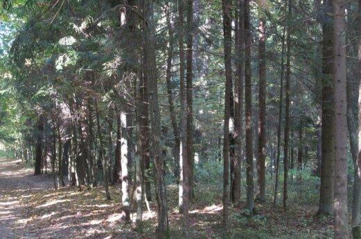 Miškuose trūnija pinigai