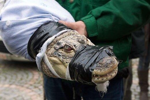 Эстония: иностранцы решили на пляже искупать крокодила