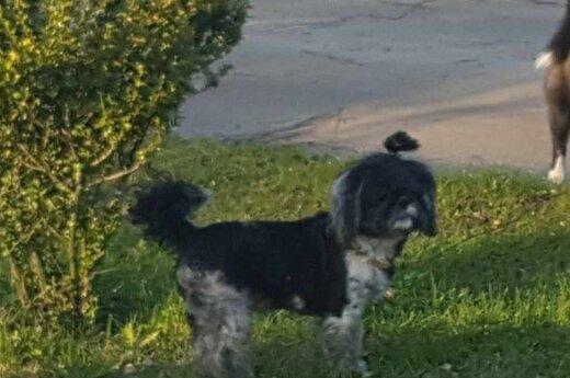 Sodų bendrijoje pavogtas išskirtinis šuniukas