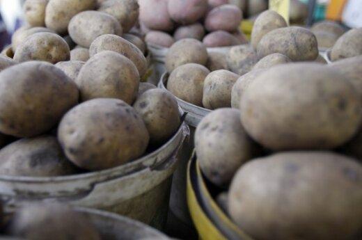 Литовцы в Балтии на втором месте по потреблению картофеля