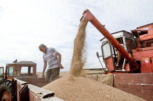 Закупочные цены на зерно в Литве в августе снизились
