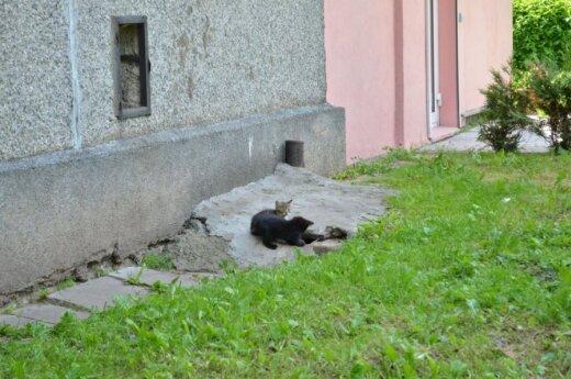"""""""Naminukai"""" prašo pagalbos mažinant beglobių skaičių Viršuliškių gatvėje!"""