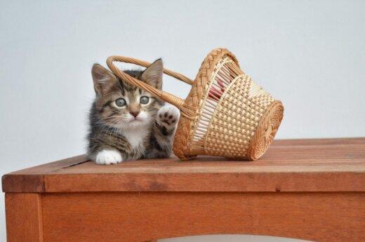Prie kokių šiukšlių priskiriami kačiukai? Jie ieško namų!