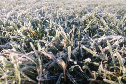 Погода: после заморозков ожидаются перемены