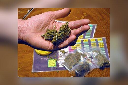 Narkotikai, kanapės, marihuana