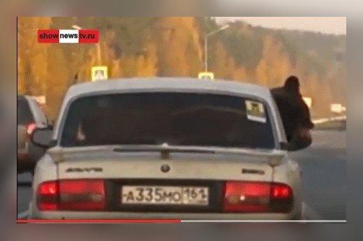 Cуровый Урал: медведей там перевозят на задних сиденьях машин