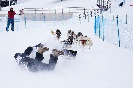 Гонки за собачьих упряжках в Эстонии