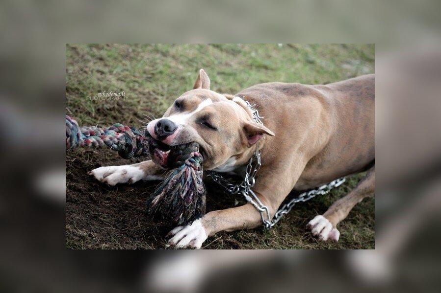 Опасные собаки - те, которых внесли в официальный список таковых. Ряд