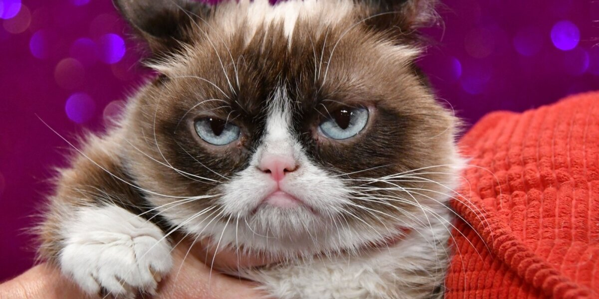 """""""Grumpy Cat"""" už autorių teisių pažeidimus prisiteisė solidžią kompensaciją"""