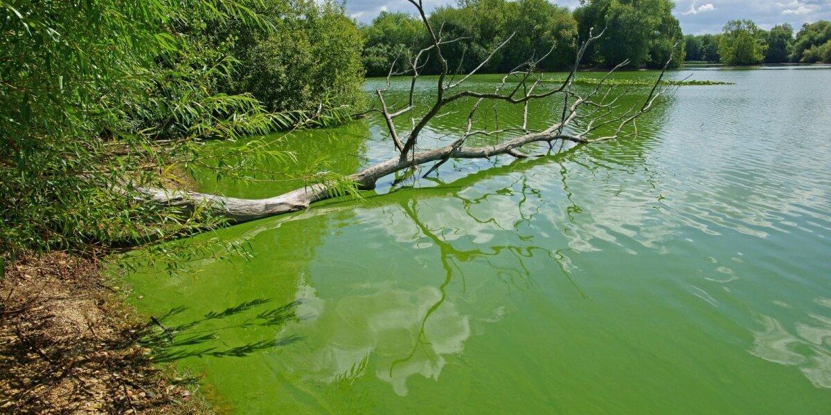 Žydintis ežeras
