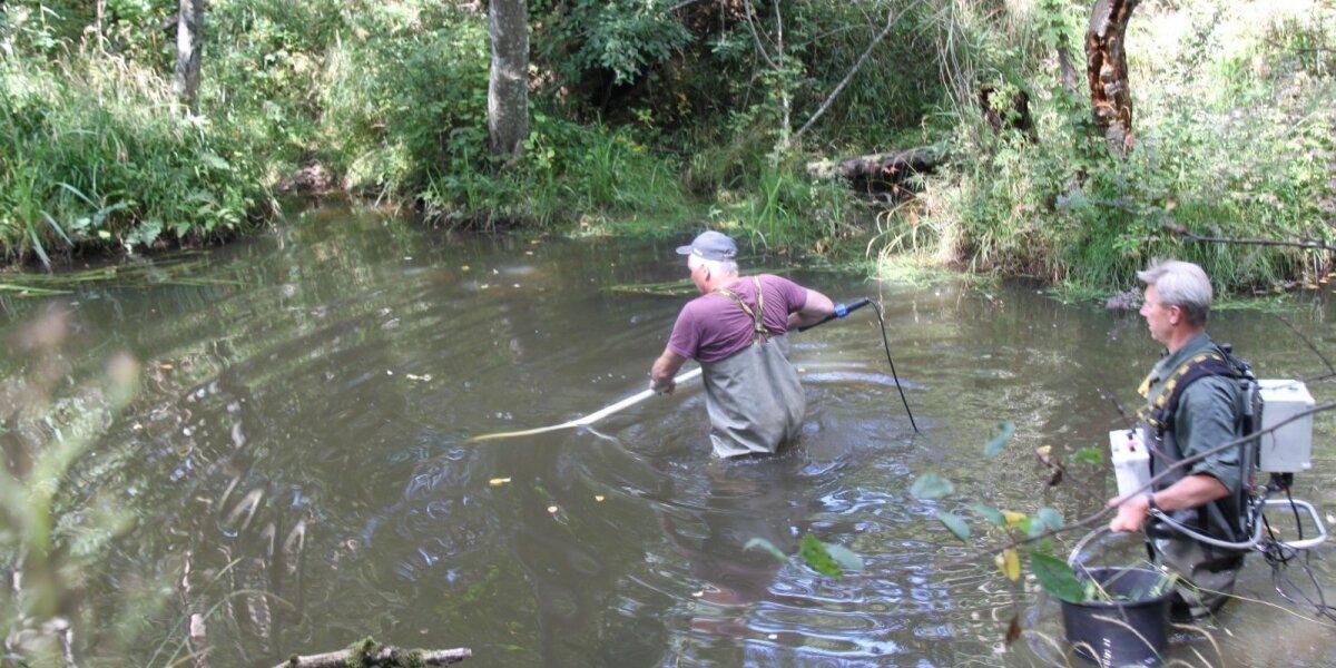 Mokslininkai upėse vykdė specialiąją žvejybą