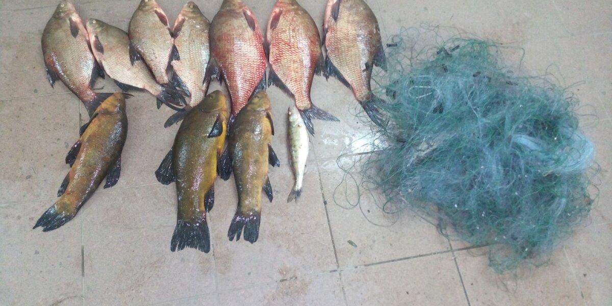 Brakonieriaus Zapsio ežere sugautos žuvys
