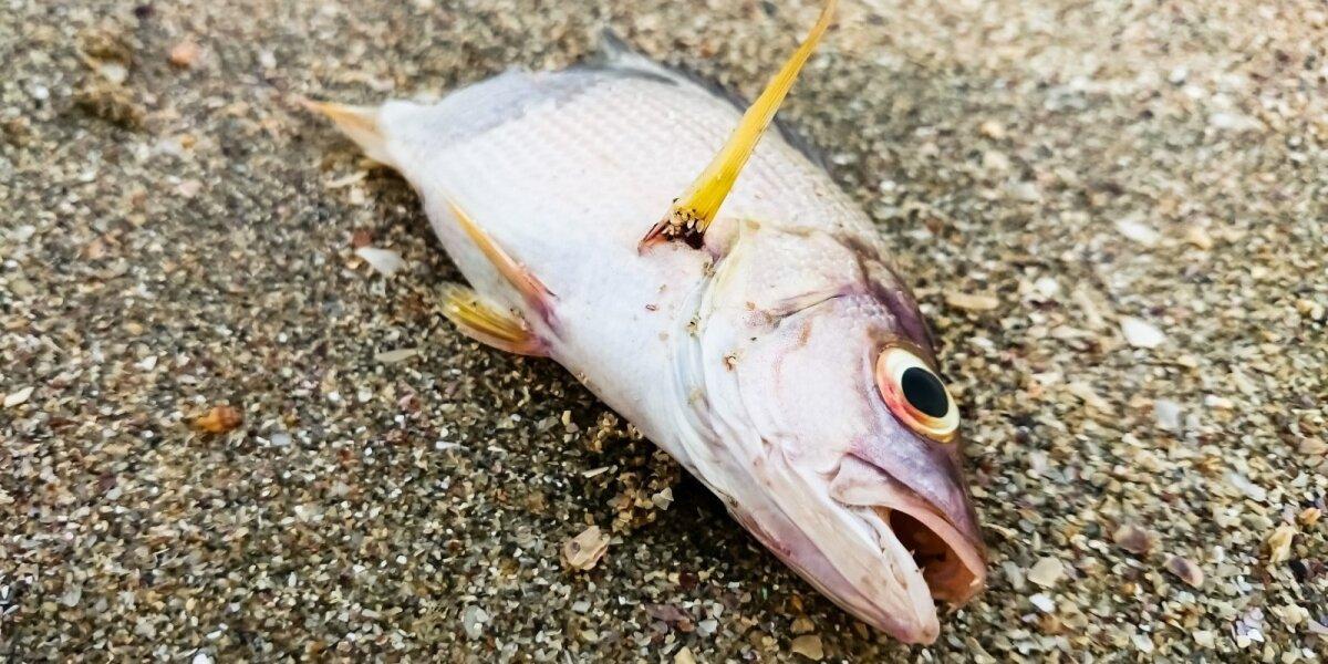 Negyva žuvis
