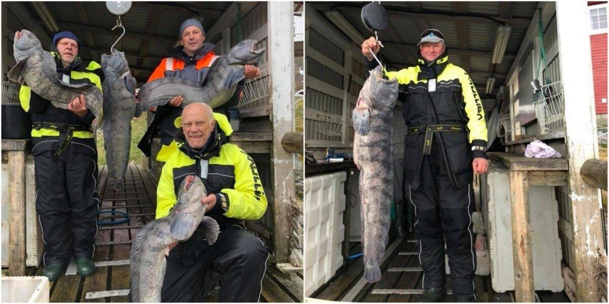 Norvegijoje žvejų sugauti laimikiai