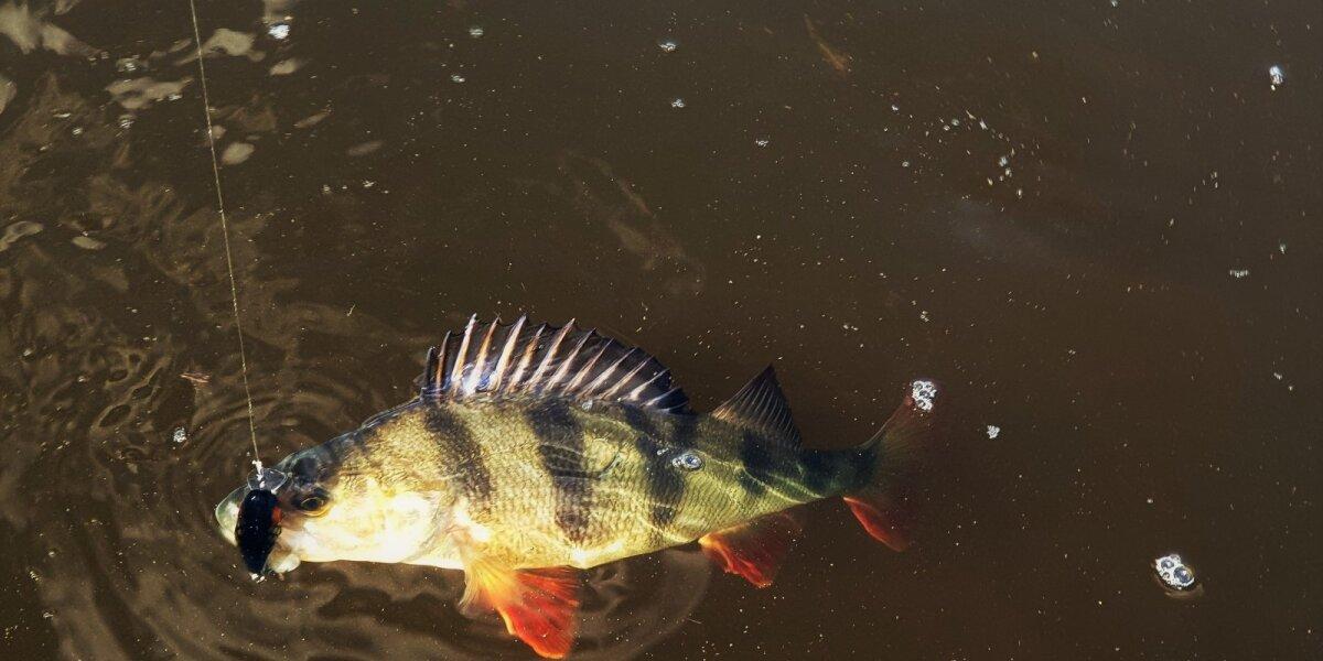Akimirka iš žvejybos Šešupėje