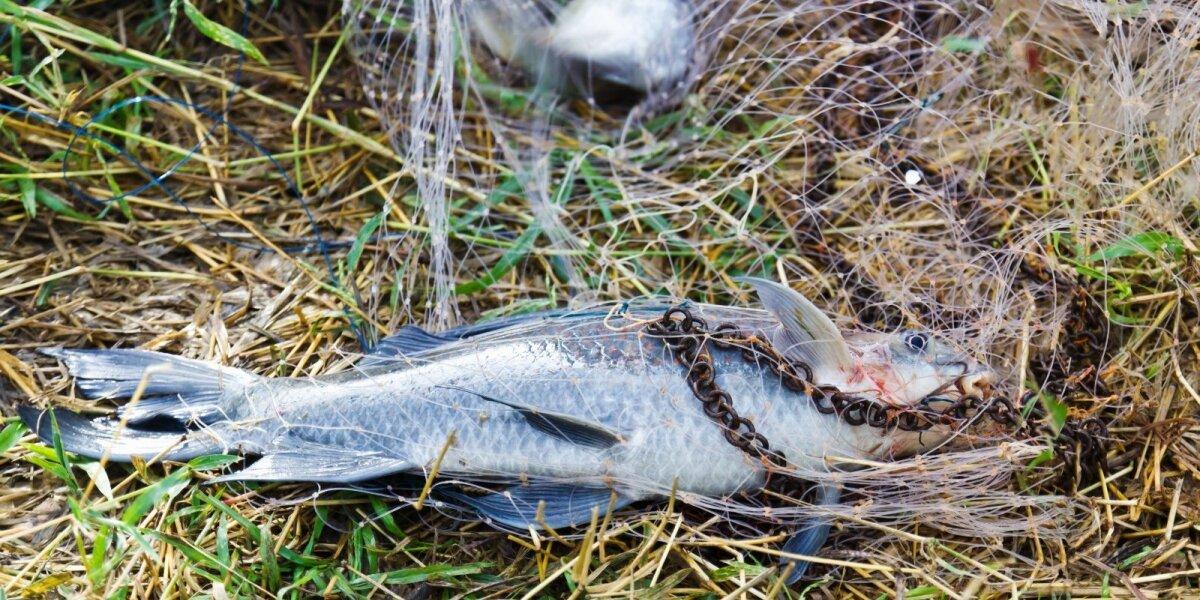 Žuvis tinkle