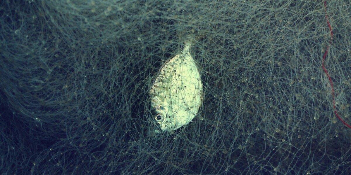 Žvejybinis tinklas