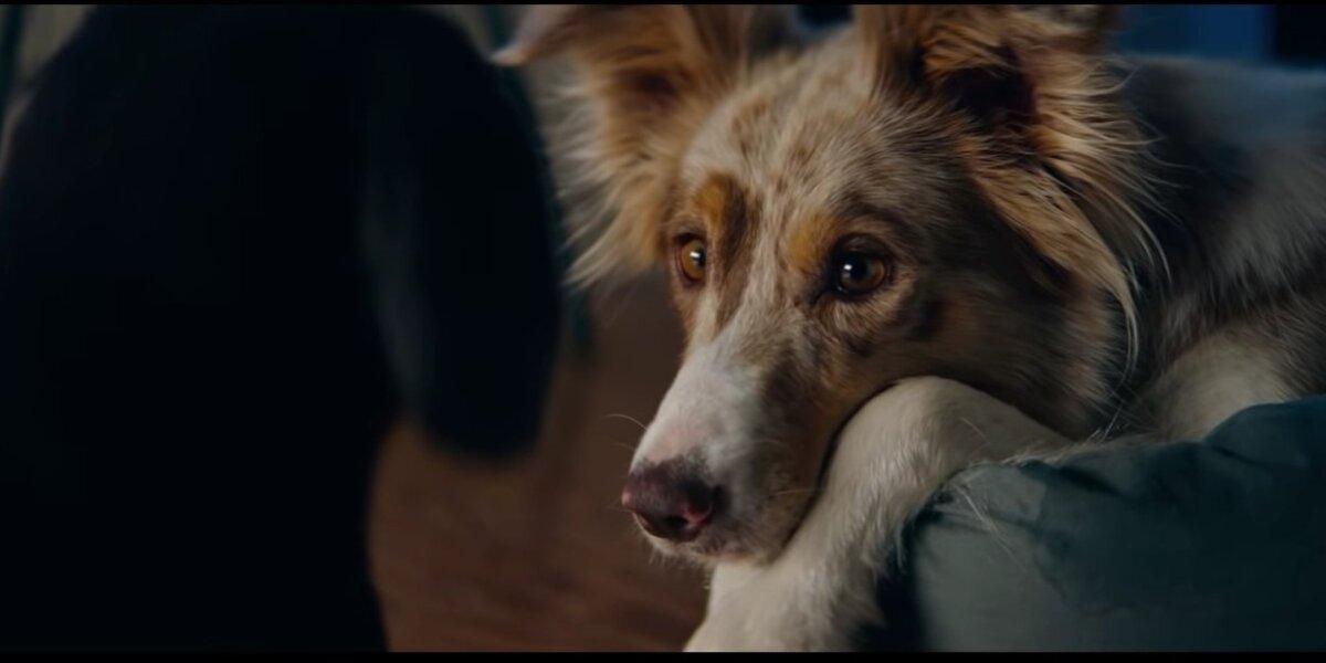 """""""IKEA"""" į 90 sekundžių reklamą sudėjo istoriją apie gyvūnų draugystę"""