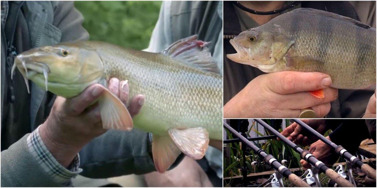 Akimirkos iš FishingTV filmų
