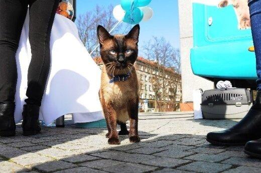 Mobili kačių klinika