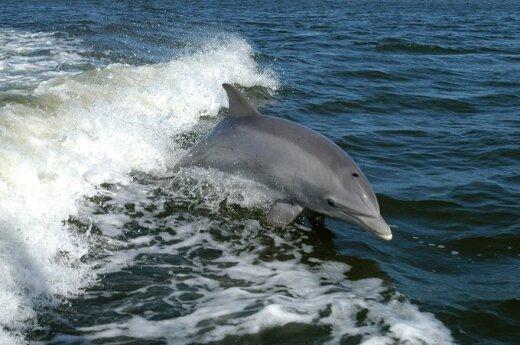 Ukraina przygotowuje bojowe delfiny